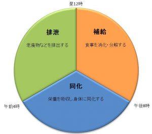 消化吸収グラフ