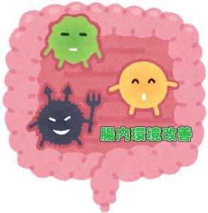ビフィズス菌と乳酸菌はどう違う