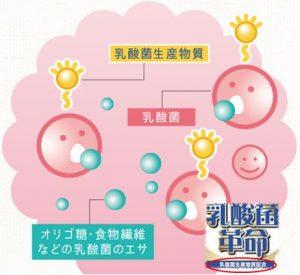 乳酸菌サプリのランキング