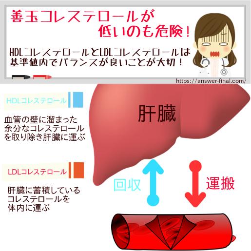 HDLコレステロールが低いなら善玉を増やす