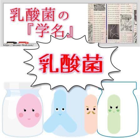 乳酸菌の学名