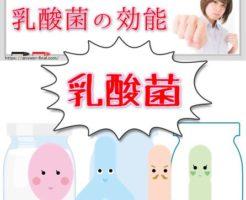 乳酸菌の効能