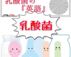 乳酸菌の英語