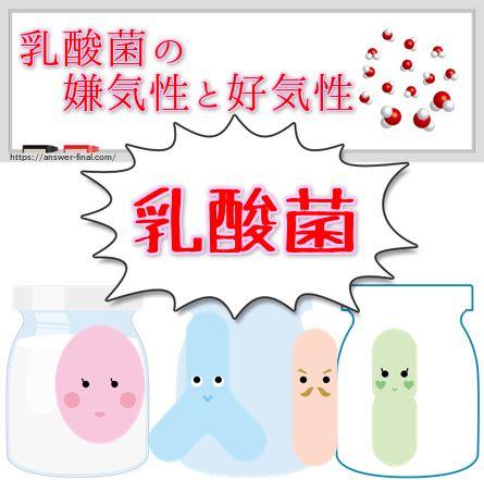 乳酸菌の嫌気性と好気性