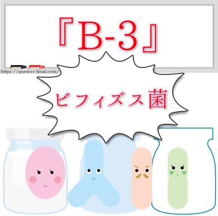 ビフィズス菌B-3